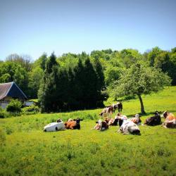 SaintGermainDesEssourts_vaches